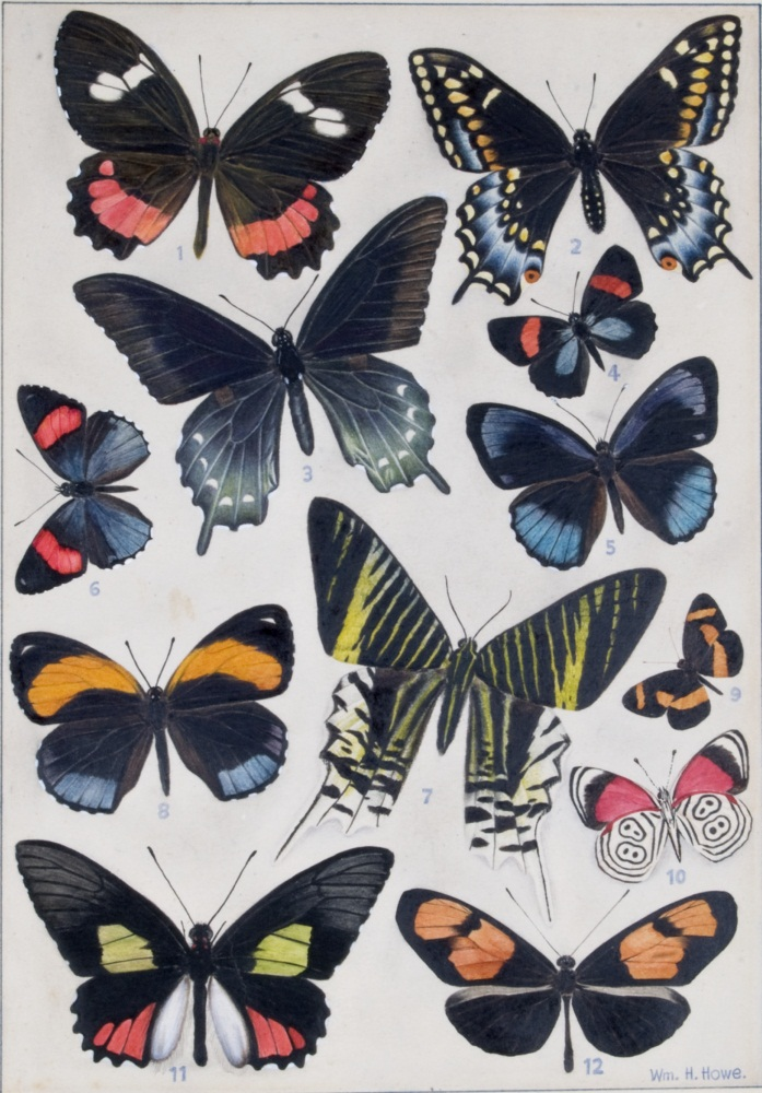 Tropical  butterflies print
