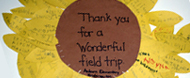 Sunflower stating - Thank you for a wonderful field trip. Auburn Elementary Kindergarten