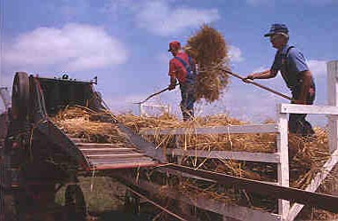 Goessel's Threshing Days celebration, 1998.