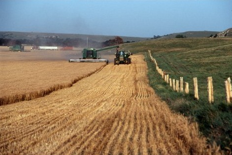 Cutting wheat outside Beloit, 1998.