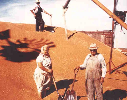 Anna and Anton Feldt pose on a large pile of wheat, Gove  County, 1957.