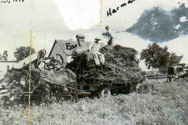 Wagonload of unthreshed wheat