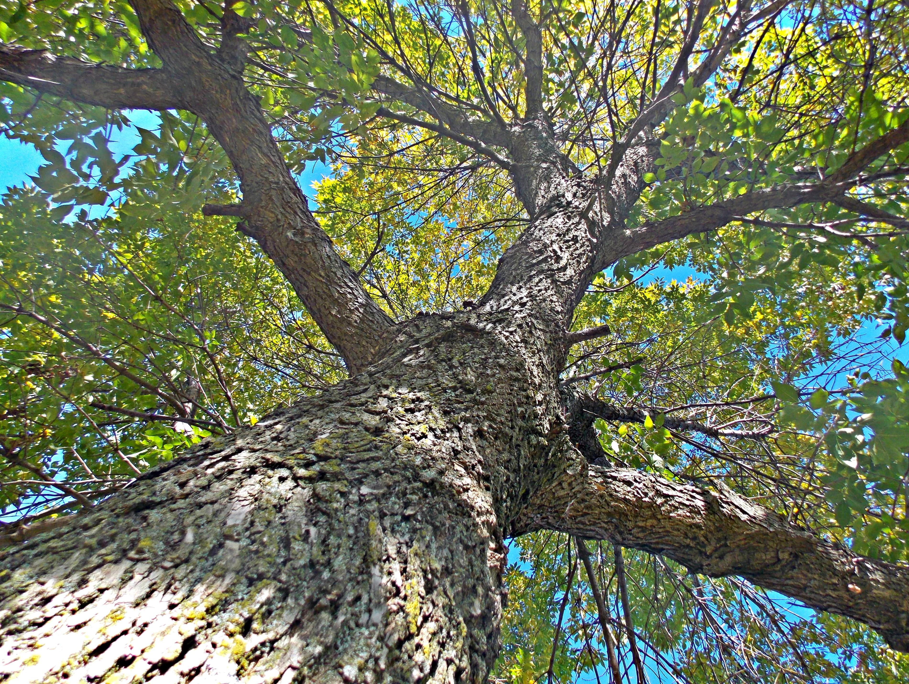 Kansas Tree of Life