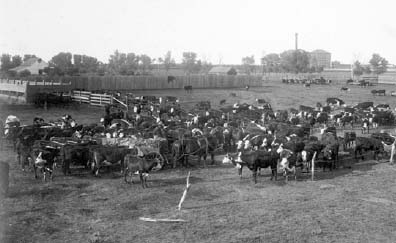 Garden City feedlot, 1900