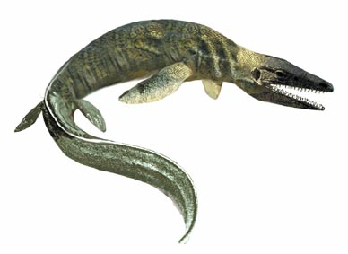 Tylosaurus image courtesy Kansas Geological Society