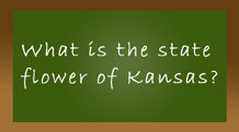 What is the state flower of Kansas?