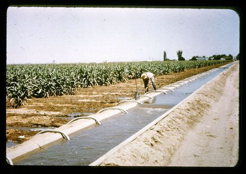 Siphon Irrigation System