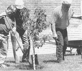 Decatur County tree planting