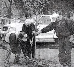 Marshall County tree planting