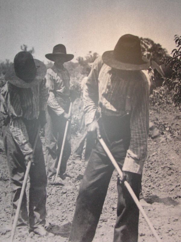 Shawnee Indians working in fields