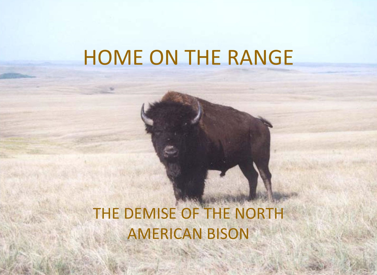Demise of Bison