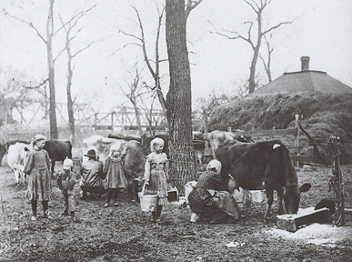 A Kansas family milking their cows.